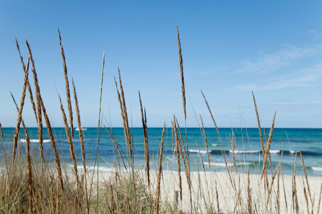 Stock Photo: 1747R-18335 Tranquil beach scene with dune grass in foreground