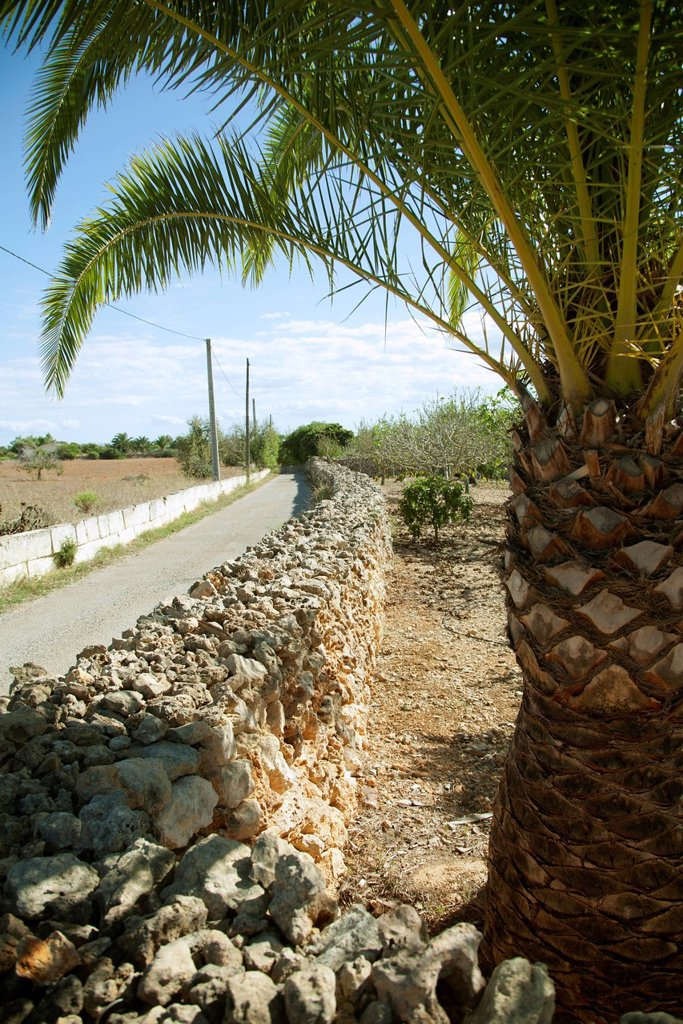 Dirt road lined by stone wall, palm tree in foreground : Stock Photo
