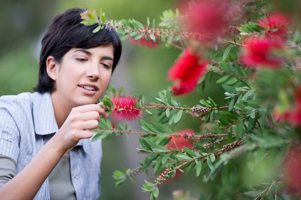 Young woman looking at flowering bottlebrush branch : Stock Photo