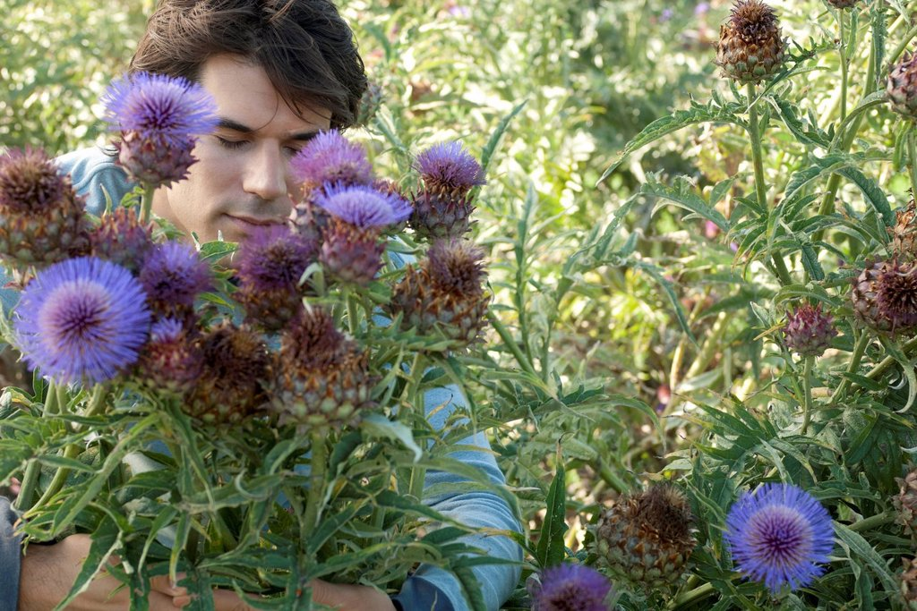 Stock Photo: 1747R-18466 Mid_adult man in flowering thistle bush, eyes closed