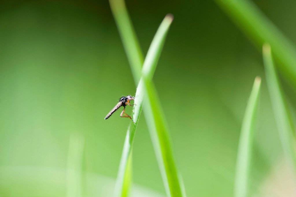 Stock Photo: 1747R-18488 Fly on leaf