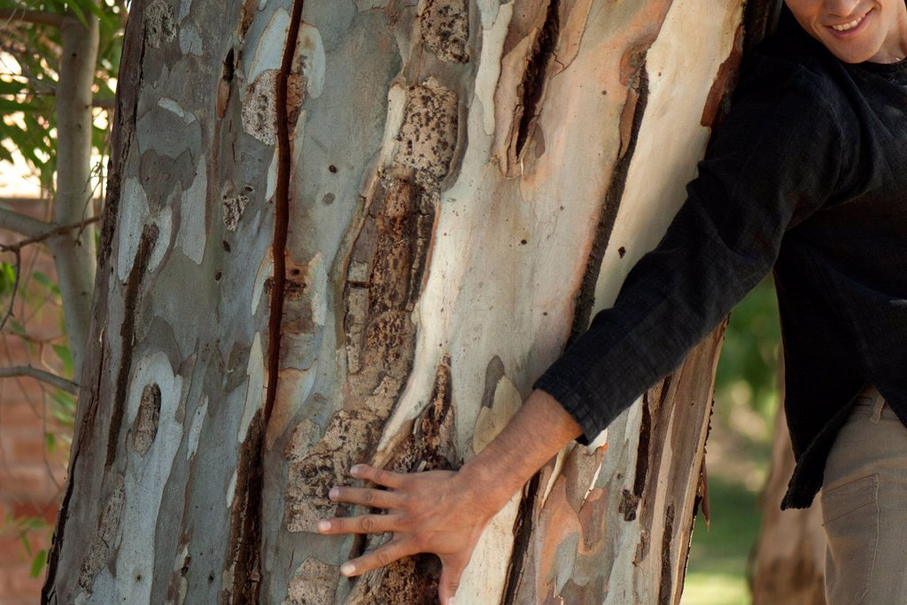 Man touching tree trunk, cropped : Stock Photo