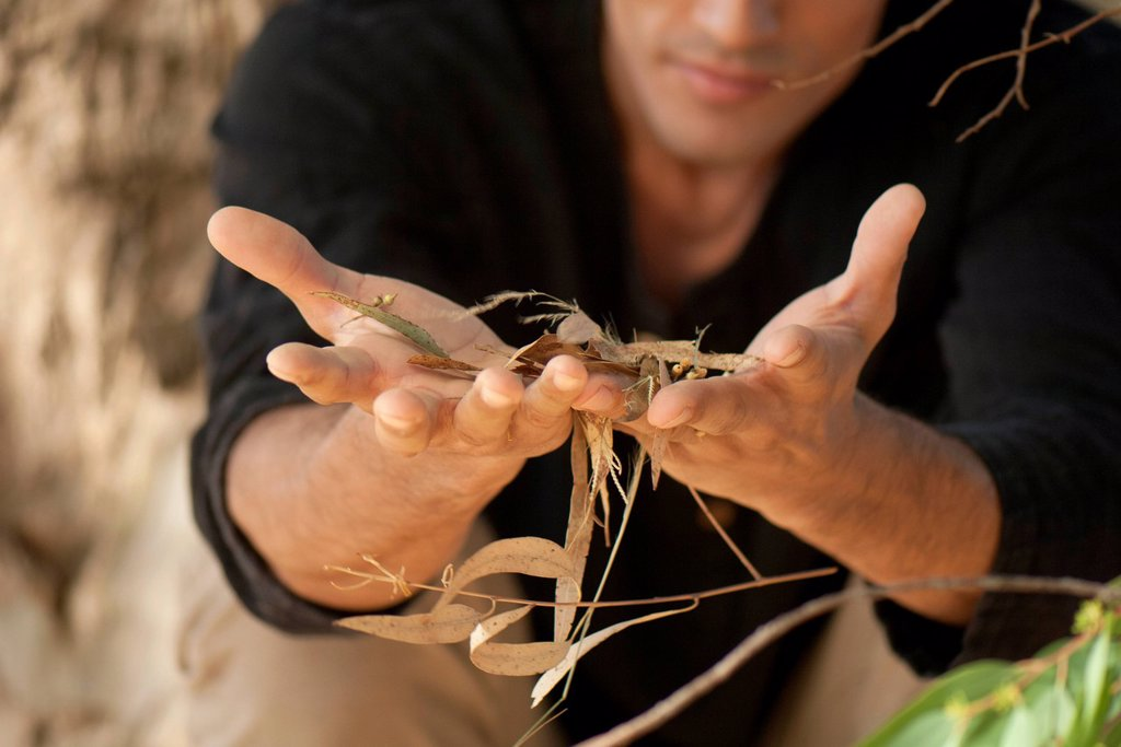 Man holding handful of twigs and leaves, cropped : Stock Photo