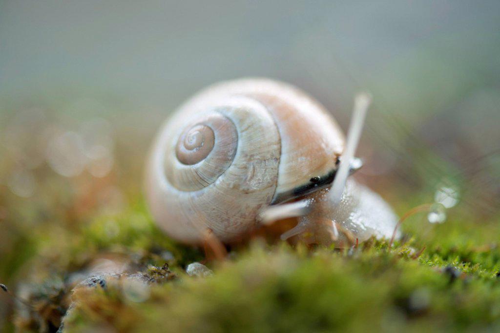 Stock Photo: 1747R-18670 Snail