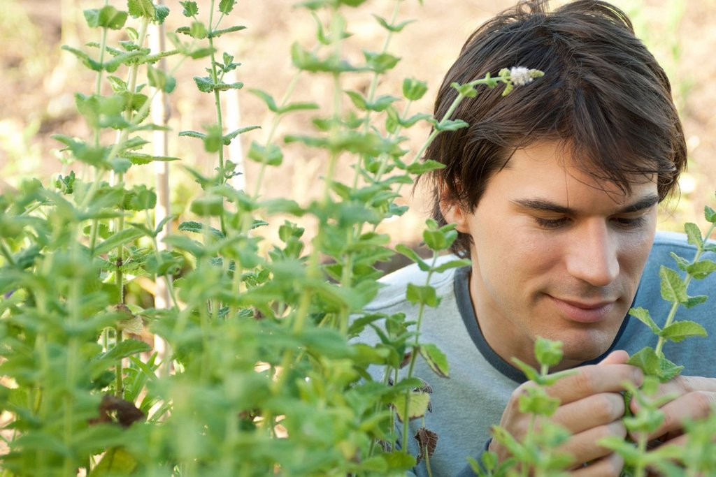 Stock Photo: 1747R-18677 Mid_adult man looking at mint plants