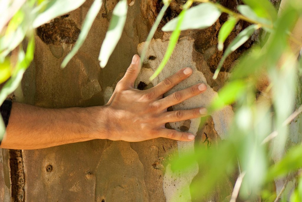 Stock Photo: 1747R-18726 Man´s hand touching tree bark, cropped