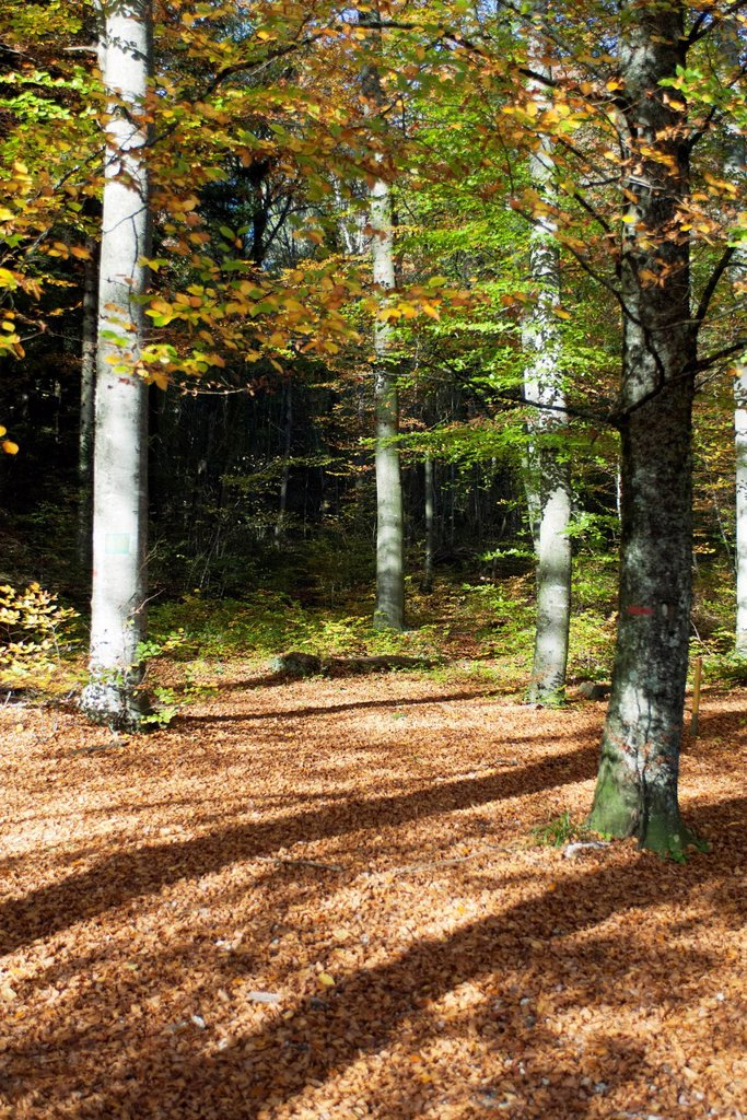 Stock Photo: 1747R-18772 Woods in Autumn