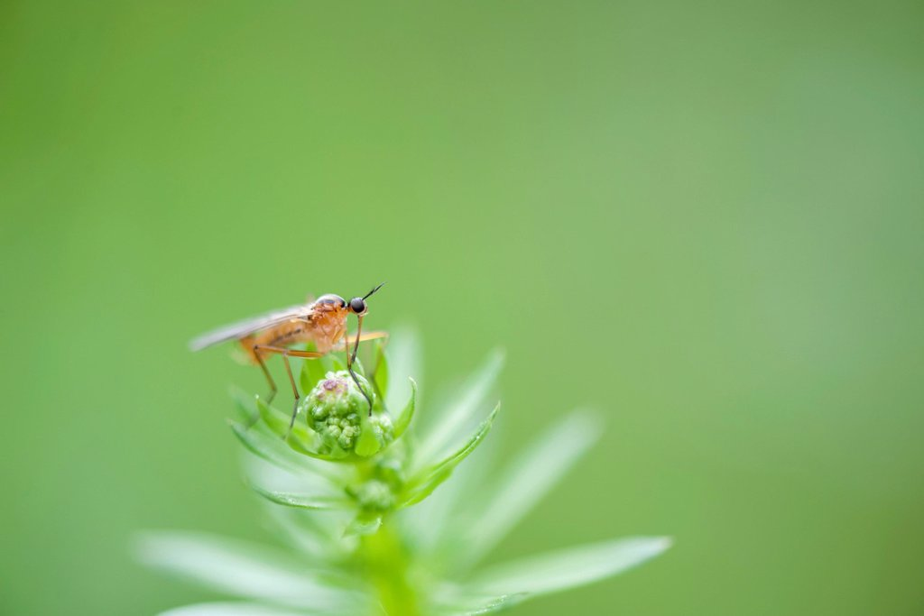 Fly perching on plant : Stock Photo