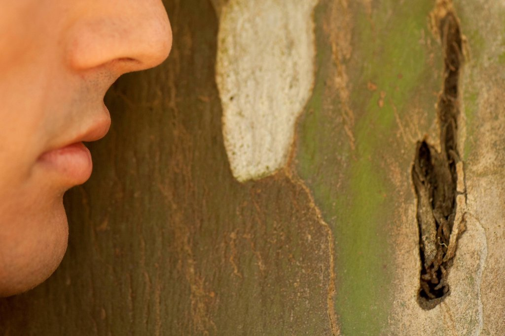 Stock Photo: 1747R-18802 Man´s face leaning against tree bark