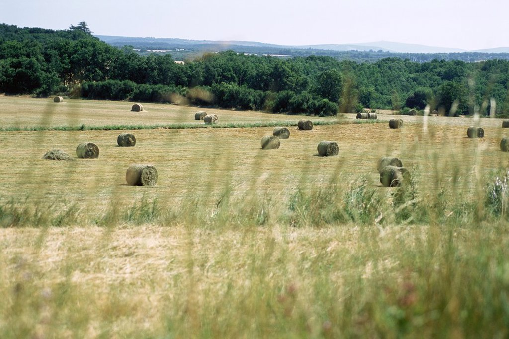 Stock Photo: 1747R-4057 Bales of hay in field