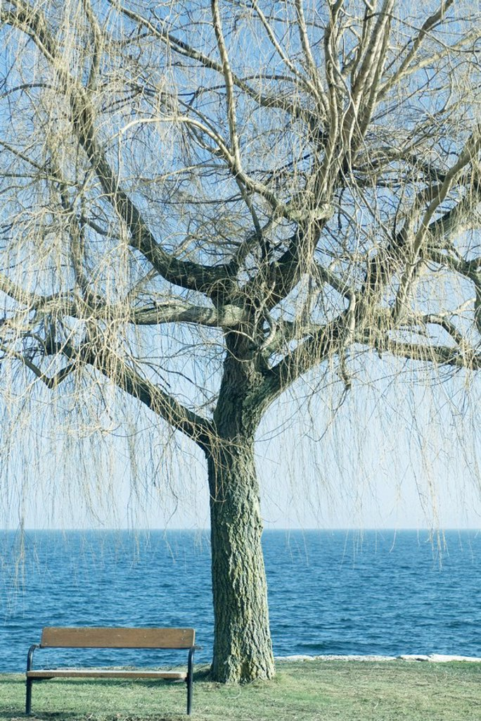 Tree and bench by edge of lake : Stock Photo