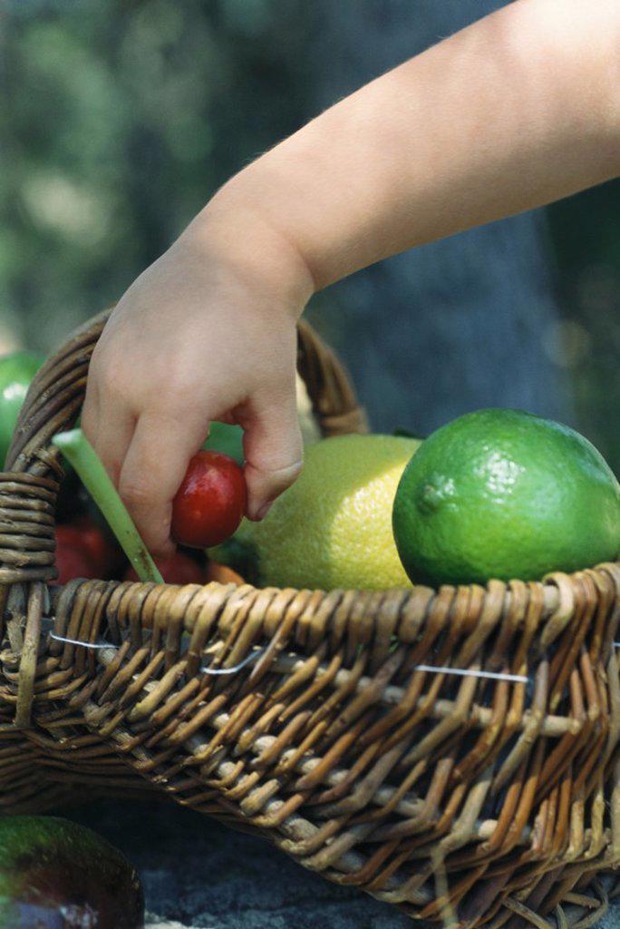 Child reaching for fruit in basket full of fresh produce : Stock Photo