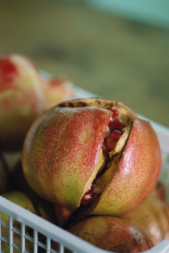 Stock Photo: 1747R-5271 Pomegranates