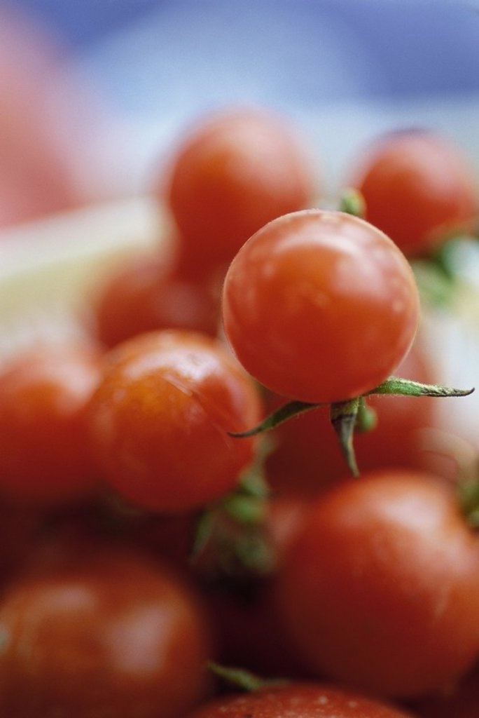 Tomatoes : Stock Photo