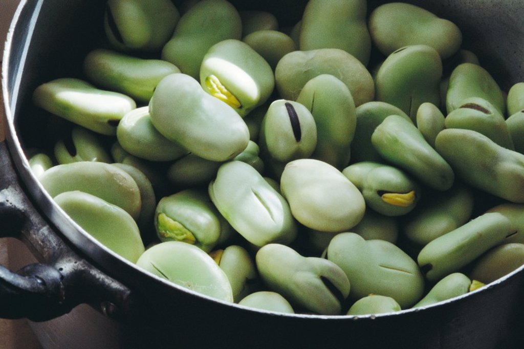 Stock Photo: 1747R-5953 Broad beans
