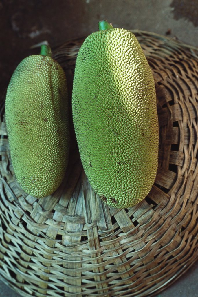 Stock Photo: 1747R-5966 Jackfruit
