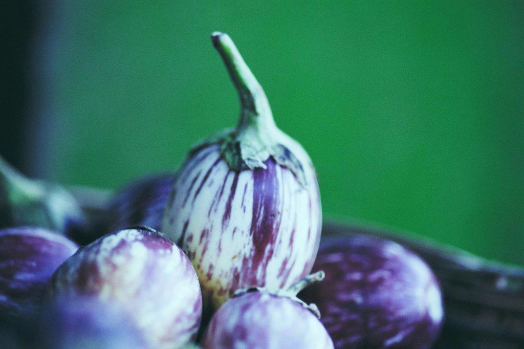 Stock Photo: 1747R-5977 Eggplants