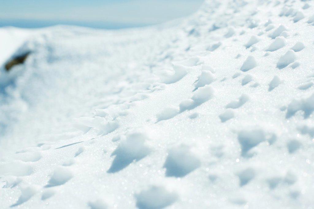 Snow, close-up : Stock Photo