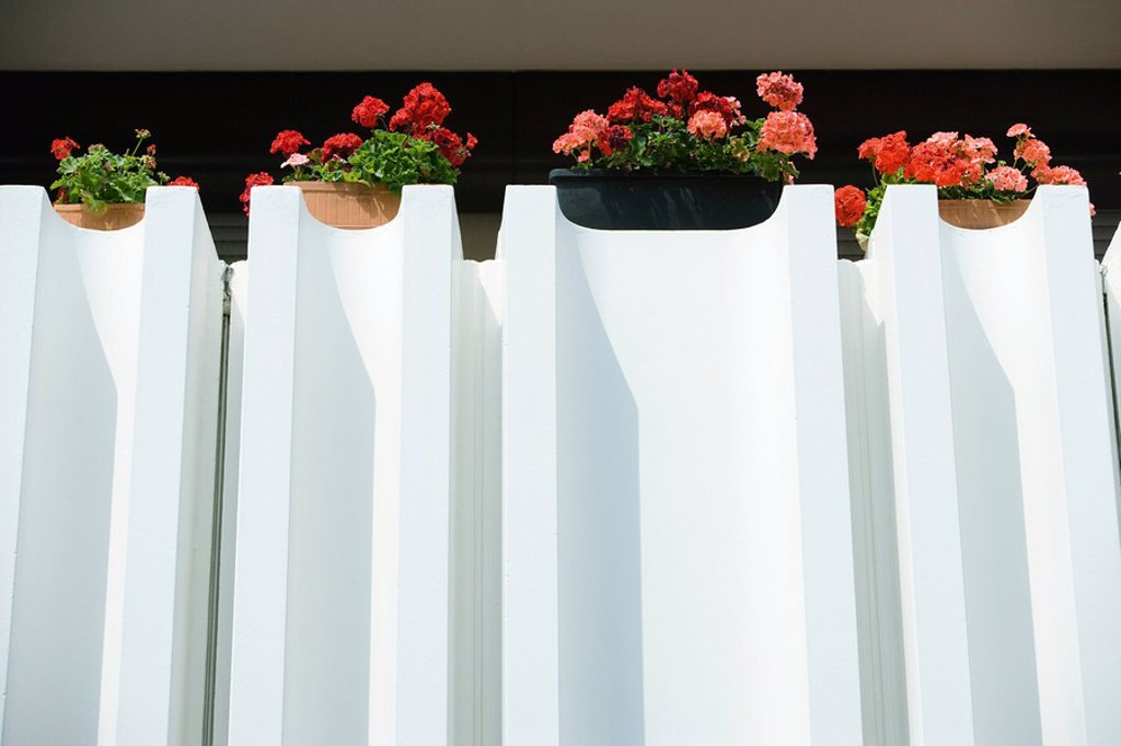 Stock Photo: 1747R-7382 Geraniums in window boxes