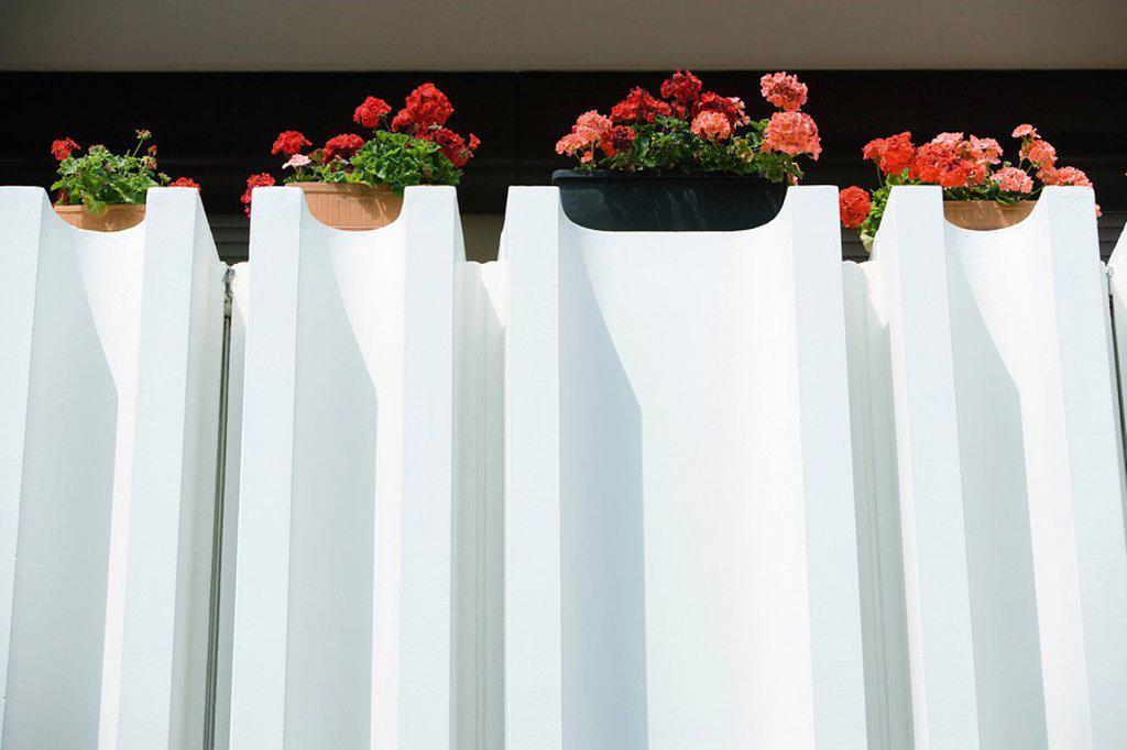 Geraniums in window boxes : Stock Photo