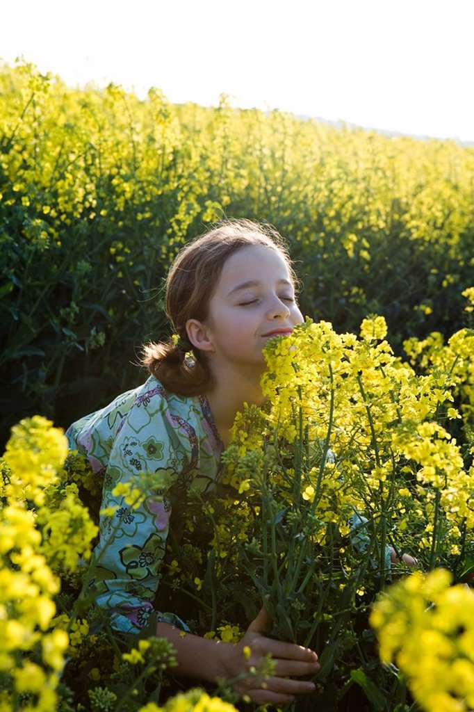 Girl standing in field, bending over, smelling armful of yellow flowers : Stock Photo