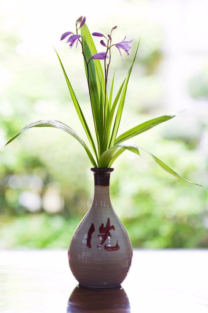 Stock Photo: 1747R-9537 Purple flowers in vase