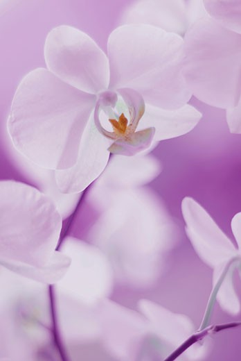 Stock Photo: 1758R-8552 Close-up of flowers