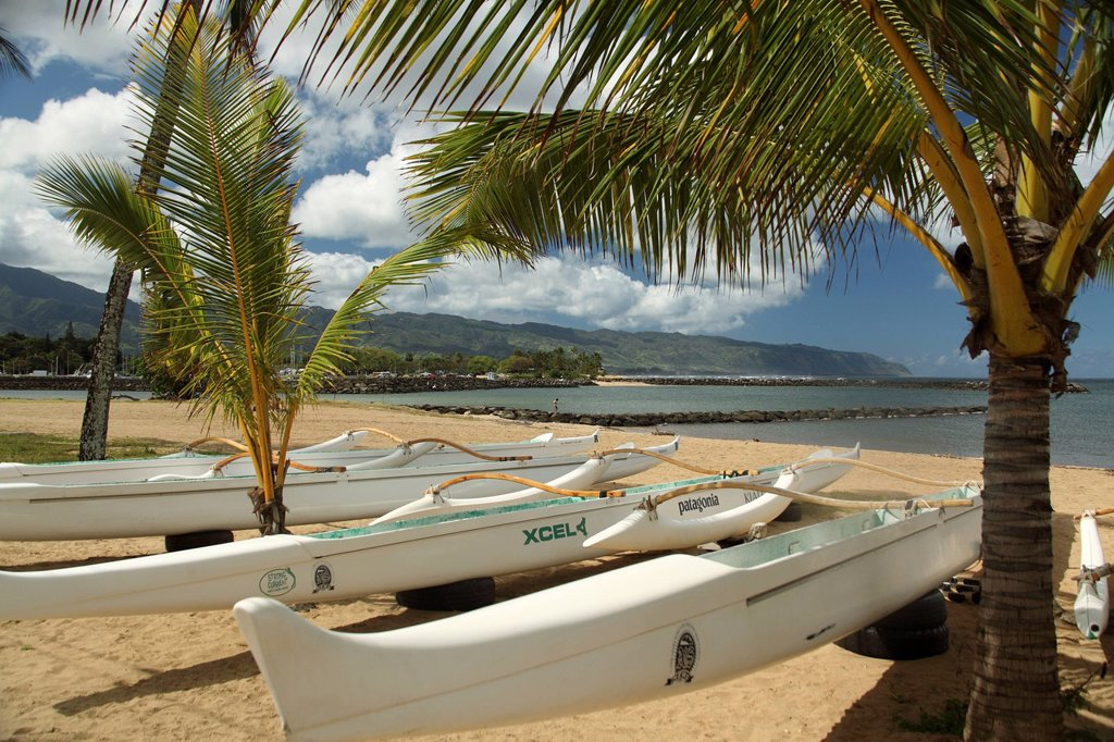 Hawaii, Oahu, Haleiwa, Row of outrigger canoes on beach. : Stock Photo