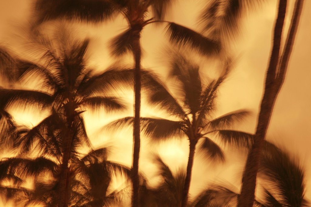 Hawaii, Oahu, Abstract motion blur of palm trees, Long exposure. : Stock Photo