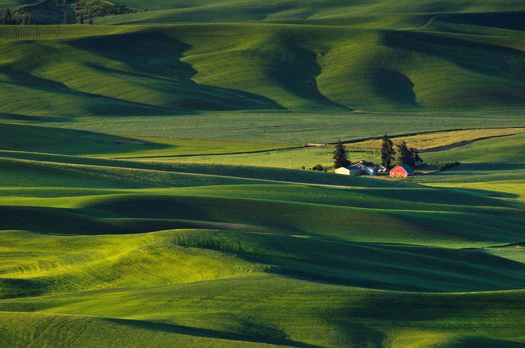 Washington, Steptoe Butte, Palouse farm and wheat fields. : Stock Photo