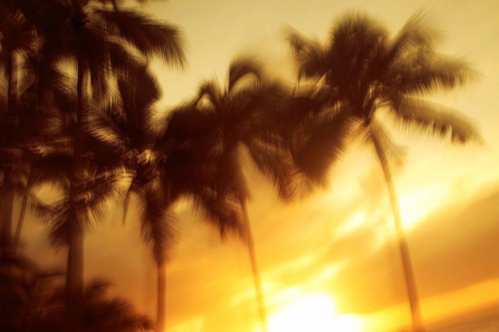 Stock Photo: 1760-15251 Palm trees blowing in the wind, Slow shutter speed.