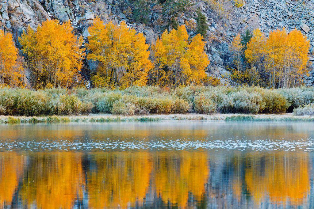 California, Eastern Sierras, Vibrant autumn scene reflecting in a mountain lake : Stock Photo