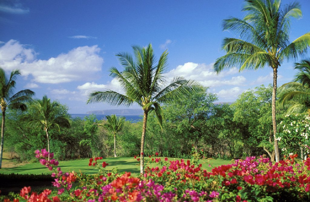 Stock Photo: 1760-17164 Hawaii, Maui, Makena beach Golf Course, bougainvillea in foreground, blue sky