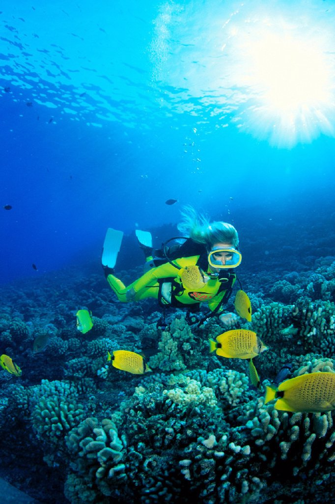Hawaii, Woman diver swims over coral reef, milletseed butterflyfish in C1331 foreground : Stock Photo