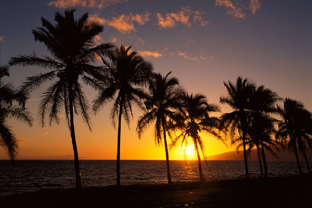 Stock Photo: 1760-19300 View of golden sunset over ocean, row of palm trees silhouetted