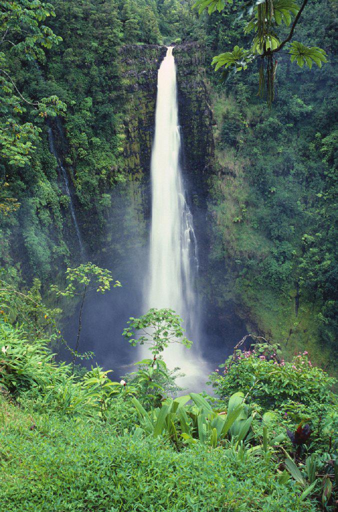 Stock Photo: 1760-19653 Hawaii, Big Island, Akaka Falls, lush greenery in foreground.