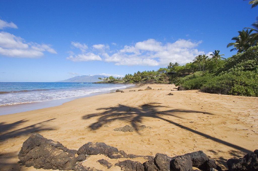 Hawaii, Maui, Makena, Chang´s Beach, Shadow of palm tree on sand. : Stock Photo