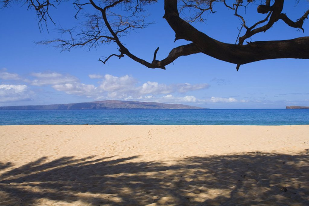 Hawaii, Maui, Makena, Big Beach, sandy beach with tree branch overhead and shadows on sand. : Stock Photo