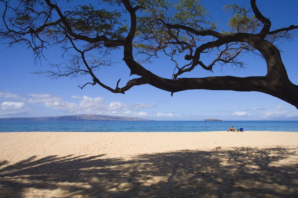 Stock Photo: 1760-25080 Hawaii, Maui, Makena, Big Beach, sandy beach with tree overhead and shadows on sand, vacationer sits in distance.