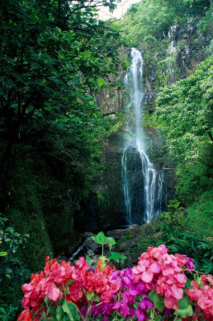 Stock Photo: 1760-2542 Maui, Wailua waterfall and rainforest, bougainvillea in foreground B1605