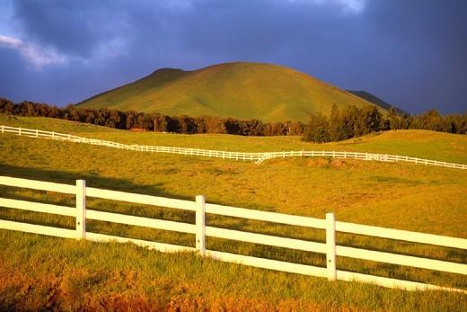 Hawaii, Big Island, North Kohala, Kohala Ranch with white fences & rolling hills : Stock Photo