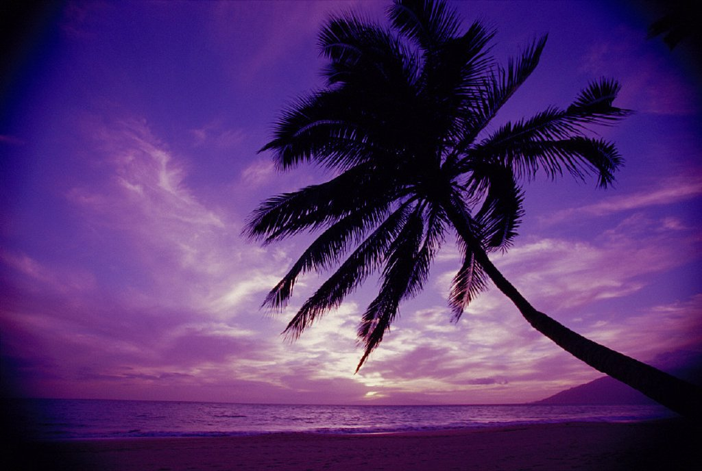 Maui Kamaole Beach @ twilight w/ purple pink sky, palm tree silhouetted D1554 Kihei : Stock Photo