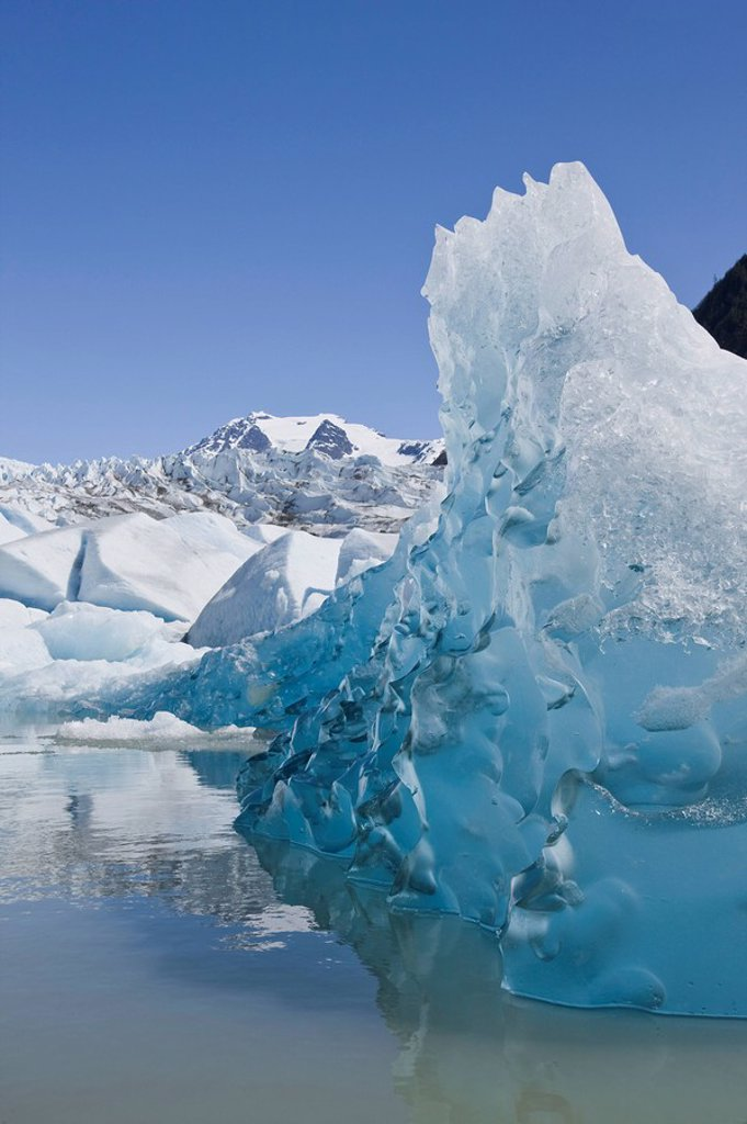 Tongass Forest, Alaska, Recently calved from the terminus of Mendenhall Glacier in Mendenhall Lake, an iceberg reveals the blue ice glaciers are so well known for. : Stock Photo