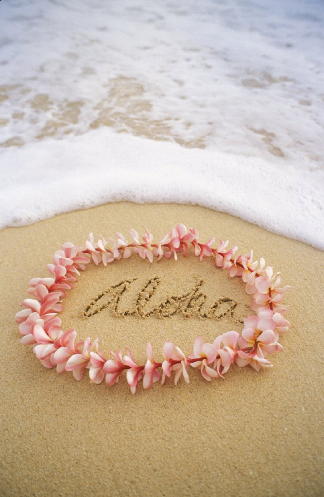 Close-up of pink plumeria lei with aloha written in sand, foaming shore water : Stock Photo