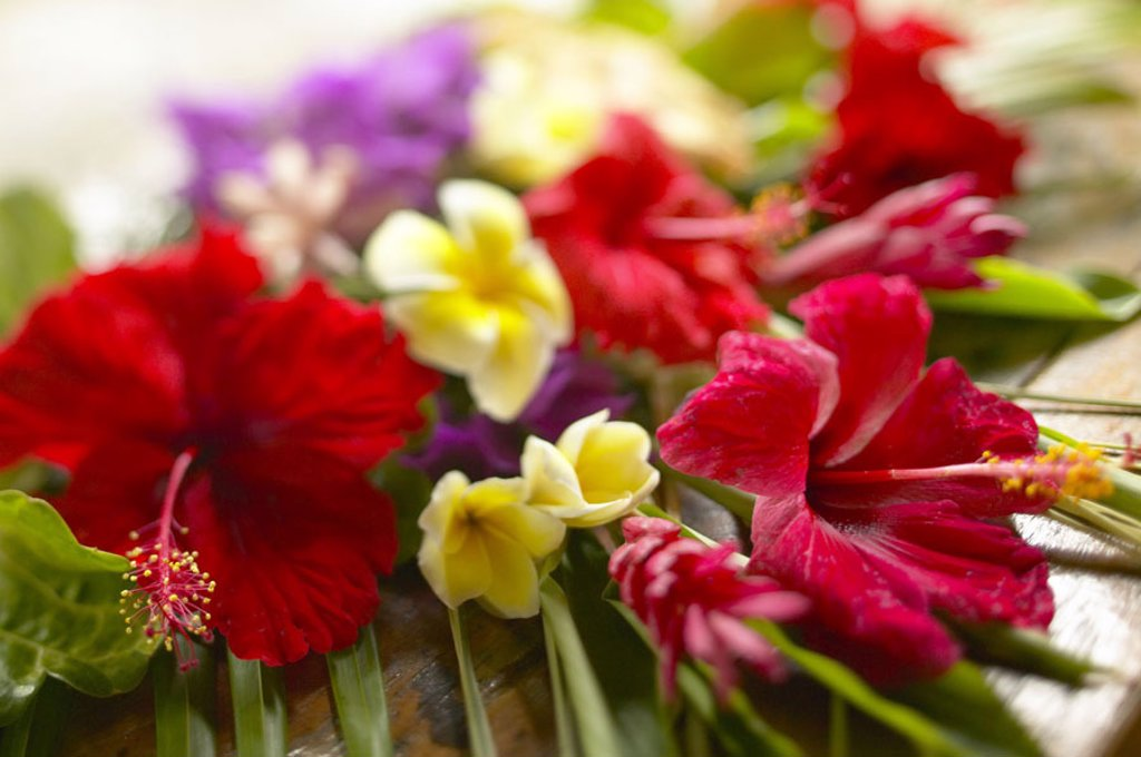 French Polyesia, Tahiti, Bora Bora, Beautiful bouquet of tropical flowers, selective focus : Stock Photo