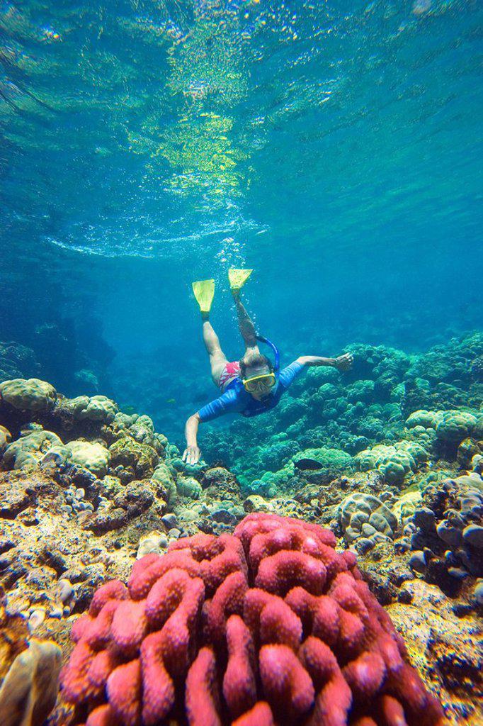 Stock Photo: 1760-7945 Hawaii, Maui, Makena, Ahihi Kinau Natural Area Reserve, Snorkeler swimming towards red coral.