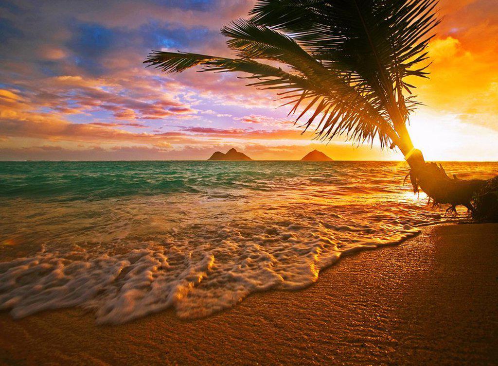 Stock Photo: 1760-8703 Hawaii, Oahu, Lanikai beach at sunrise.