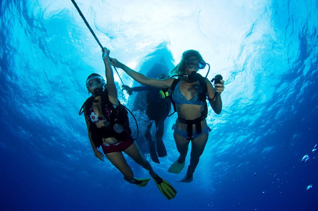 Hawaii, Divers underwater on anchor line. : Stock Photo