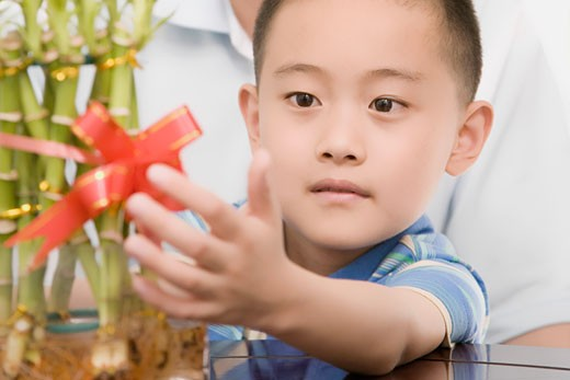 Stock Photo: 1768R-11788 Close-up of a boy touching a bamboo plant