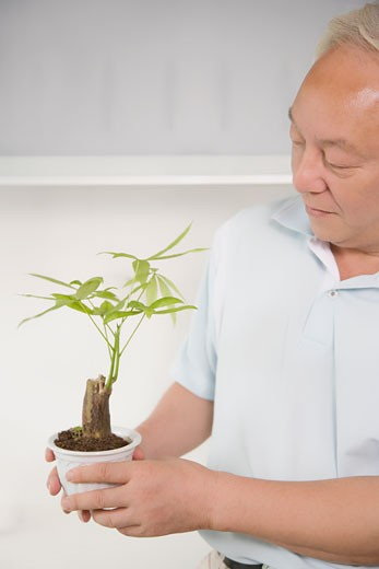 Stock Photo: 1768R-12360 Close-up of a mature man holding a potted plant